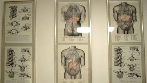 Le corps humain pour l'ostéopathie